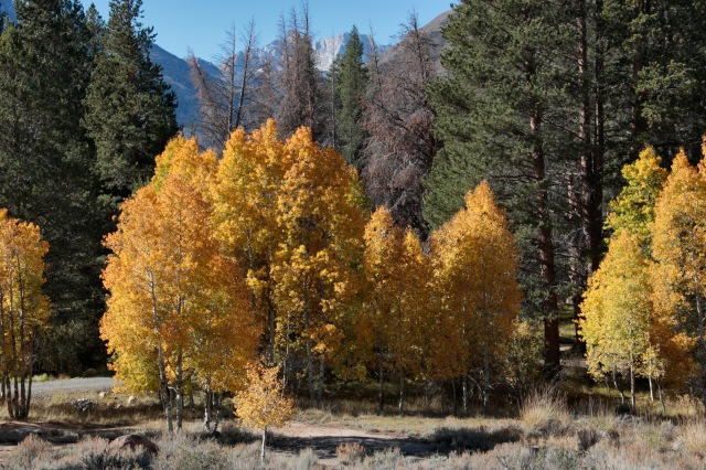 'Look over there,' sang Japhy, 'yellow aspens....'